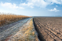 Autumn Corn Field Road Royalty Free Stock Images
