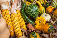 Autumn Corn and Gourds. Autumn corn with husks and a variety of gourds on leaves on the ground Stock Images