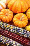 Autumn Corn and Gourds Royalty Free Stock Photo
