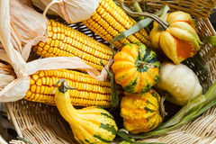 Autumn Corn and Gourds. In a willow basket Royalty Free Stock Images