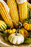 Autumn Corn and Gourds. In a willow basket Royalty Free Stock Photo