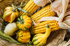 Autumn Corn and Gourds. In a willow basket Royalty Free Stock Photography