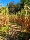 Autumn Corn Maze Stock Photos
