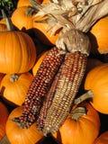 Autumn Corn With Pumpkins Stock Photos