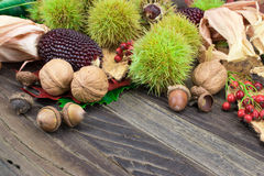 Autumn corn and seasonal nuts background. Old wooden table with healthy nuts, red corn, walnuts, sweet chestnuts, rose hip, bark and acorn. Ingredients rich in royalty free stock photo