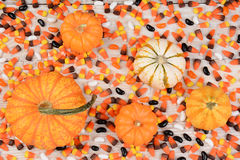 Autumn Corn y calabazas Imagenes de archivo