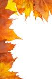 Autumn corner Royalty Free Stock Image