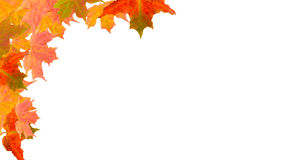 Autumn corner  border. Autumn leaves in a frame  background Royalty Free Stock Photo