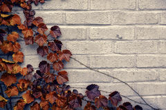 Autumn Corner Border - Brown Grape Vine Leaves Stock Photos