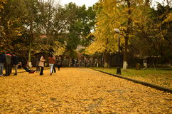 In autumn,a corner of the campus of Suzhou University,China. Stock Photography