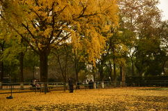In autumn,a corner of the campus of Suzhou University,China. Royalty Free Stock Image