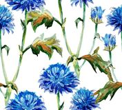 Autumn cornflowers Stock Photos