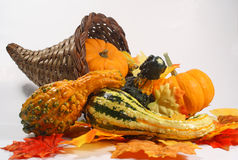 Autumn cornucopia Stock Images