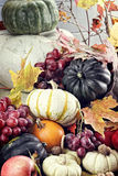 Autumn Cornucopia Images libres de droits