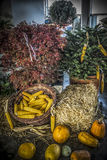 Autumn Cornucopia. A bunch of autumn produce Stock Photos