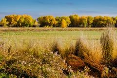 Autumn Cornucopia de couleur photographie stock libre de droits