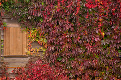Autumn cottage Royalty Free Stock Photos