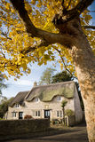 Autumn Cottage. Old thatched cottage in an English country village with yellow leaved tree in foreground Royalty Free Stock Photography