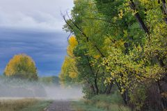 Autumn Cottonwoods temprano imagen de archivo libre de regalías