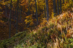 Autumn in countrside in Romania. Beautiful autumn landscape in Domogled National Park, Romania Royalty Free Stock Photo