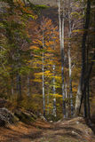 Autumn in countrside in Romania. Beautiful autumn landscape in Domogled National Park, Romania Stock Photography