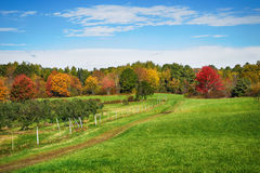 Autumn country in New England apple orchard Stock Images