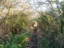 Autumn country pathway hedge holloway no people path countryside. Essex; england; uk royalty free stock photos