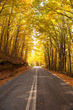 Autumn country road Stock Image