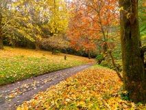 Autumn on the country road Stock Images