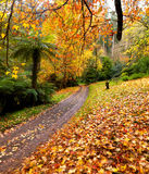 Autumn on the country road Royalty Free Stock Photo
