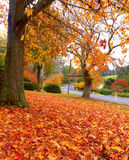 Autumn on the country road Royalty Free Stock Photos