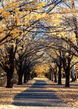 Autumn country road Royalty Free Stock Image