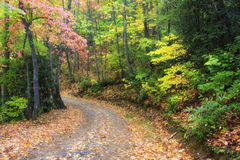 Autumn Country Road. Gravel Country Road in Autumn Royalty Free Stock Image
