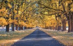 Autumn country road Stock Photos