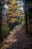Autumn Country Road. Colorful autumn country of road Stock Images
