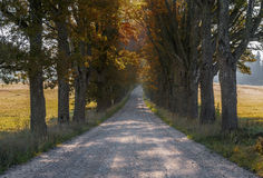Autumn country road, Latvia Royalty Free Stock Images