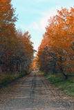 Autumn country road Royalty Free Stock Images