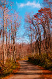 Autumn country road in Yamagata. With blue sky stock images