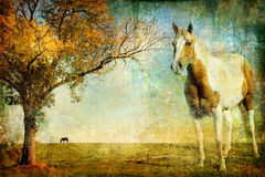 Autumn in countryside Royalty Free Stock Images