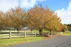 Autumn countryside Stock Image