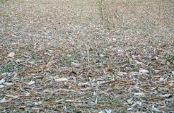 Autumn in the countryside,7. Autumn in the countryside 2016.,Bregana Pisarovinska,Croatia,Europe,field after maize harvest,7 Royalty Free Stock Photo