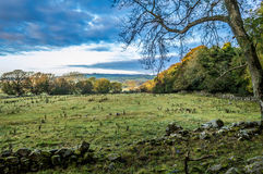 Autumn Countryside en Irlande Photographie stock libre de droits