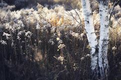 Free Autumn Countryside Landscape With Tall Reed Grass And Birch Tree Stock Photos - 103023163