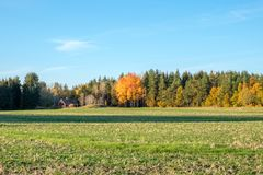 Autumn in Sweden. Autumn in the countryside of Ostergotland, Sweden on a sunny day in October 2017 Royalty Free Stock Photos