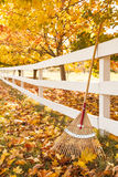 Autumn in the countryside with rake leaning up against white picket fence under maple trees with fallen leaves