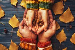 Autumn couple holding hands oak acorn top view,fall ash  leaf,Au. Tumnal mood,relationship family love concept Stock Photography