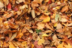 Autumn covering Royalty Free Stock Images