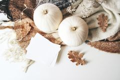 Autumn cozy composition. Blank card mockup scene. White pumpkins, dry oak leaves, Christmas lights and wool plaid on. White table background. Thanksgiving, fall stock image