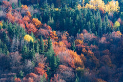 Autumn creations. Colorful forest during autumn season Stock Photos