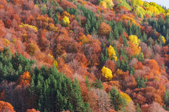 Autumn creations. Colorful forest during autumn season Royalty Free Stock Photography